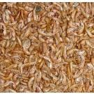 Boddingtons Premium Dried Gammarus Shrimp